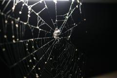 Spindel på spindelrengöringsduk under ett ljus arkivfoto