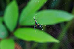 Spindel på spindelrengöringsduken Fotografering för Bildbyråer