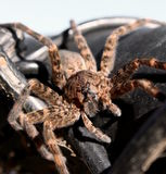 Spindel på staketet Royaltyfria Bilder