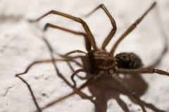 Spindel på väggen 3 Royaltyfri Foto