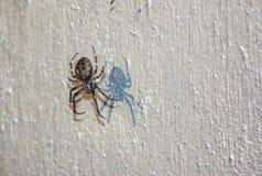 Spindel på väggen Fotografering för Bildbyråer