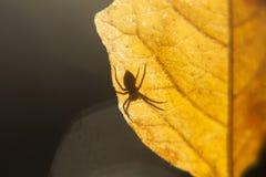 Spindel på en leaf Arkivbilder