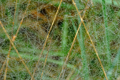 Spindel-rengöringsduk Arkivfoton