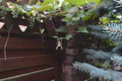 Spindel rengöringsduk Royaltyfri Fotografi