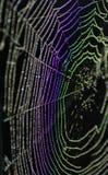 Spindel rengöringsduk Royaltyfri Bild