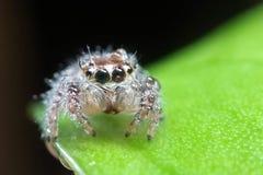 Spindel - som är nära upp av en spindel fotografering för bildbyråer