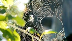 Spindel som arbetar på dess rengöringsduk bland trädfilialer i trädgården lager videofilmer