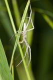 Spindel som bort går på gräsplan Fotografering för Bildbyråer