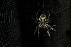 Spindel som förföljer för ett rov arkivbilder