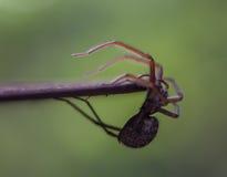 Spindel som hänger av en tabell Arkivfoto
