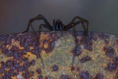 Spindel som hänger av en tabell Arkivfoton