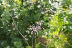 Spindel som växten framme av gröna buskar arkivbild
