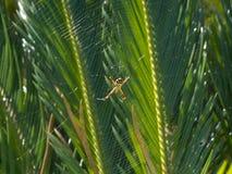 Spindel som vilar i mitten av rengöringsduken royaltyfria bilder