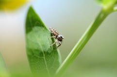Spindel värld Royaltyfria Foton