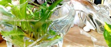 Spindel-växt arkivfoto