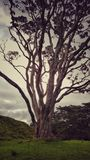 Spindeldürrer Baum Stockbilder