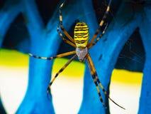 Spindeldjurliv arkivbilder