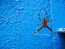 Spindeldjurlivdjurliv arkivbilder
