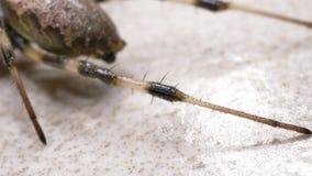 Spindelflyttningar långsamt stock video