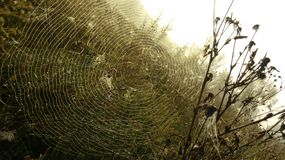 Spindelgenomkörare fotografering för bildbyråer