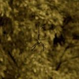 Spindelkonst Royaltyfri Fotografi