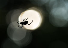 Spindelkontur på en rengöringsduk Royaltyfri Foto