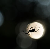 Spindelkontur på en rengöringsduk Fotografering för Bildbyråer