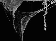 Spindelnät- eller spindelrengöringsduk i det forntida thai huset som isoleras på svart bakgrund Arkivfoto