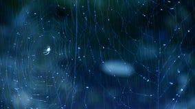 Spindelnät för spindelrengöringsduk bredvid strömvatten i regn lager videofilmer