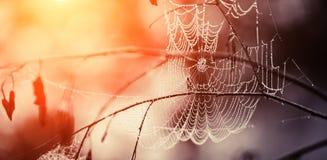 Spindelnät i daggdroppar Arkivfoto