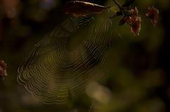 Spindelnät i mörkret Arkivbild