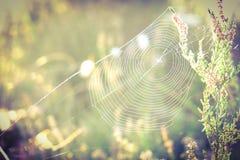 Spindelnät i solen fotografering för bildbyråer
