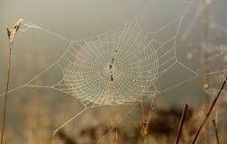 Spindelnät i solen arkivfoto
