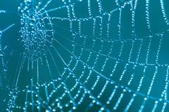 Spindelnät med daggdroppar Royaltyfri Bild