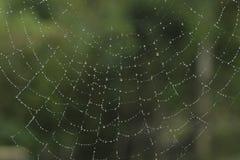 Spindelnät med droppar Arkivbilder
