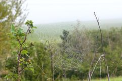 Spindelnät och dagg 5 Arkivfoto
