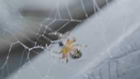 Spindelnät på bokehsolnedgångbakgrunden , Slut för spindelrengöringsduk upp Spindel Slut för spindelrengöringsduk upp i mörker stock video