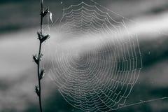 Spindelnät på en filial med suddig bakgrund Arkivbild