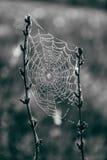 Spindelnät på en filial med suddig bakgrund Royaltyfri Bild