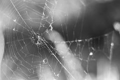 Spindelnät på en grå bakgrund Royaltyfri Bild