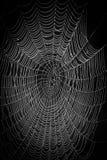 Spindelnät på en naturlig bakgrund fotografering för bildbyråer