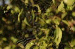Spindelnät på gräsplan Royaltyfria Bilder