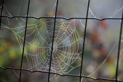 Spindelnät på staketet för Chain sammanlänkning Royaltyfria Bilder