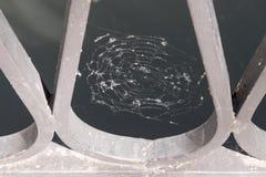 Spindelnätet med oklar abstrakt textur lokaliseras på ett staket Royaltyfria Bilder