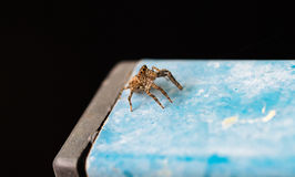 Spindeln Royaltyfri Bild