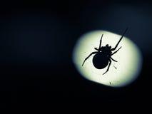 Spindeln Arkivfoton