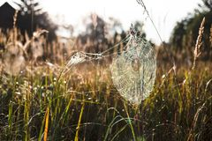 Spindeln förtjänar Royaltyfria Bilder
