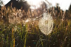 Spindeln förtjänar Royaltyfri Bild