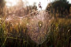 Spindeln förtjänar Arkivbild