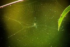 Spindeln förtjänar arkivfoto
